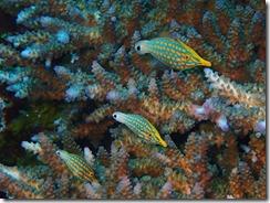 okinawa kerama diving1218