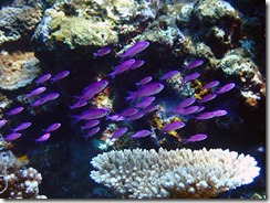 okinawa kerama diving1219