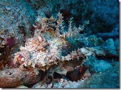 okinawa kerama diving1222