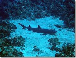 okinawa kerama diving1223