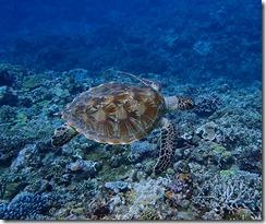 okinawa kerama diving1227