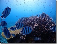 okinawa kerama diving1228
