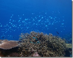 okinawa kerama diving1229