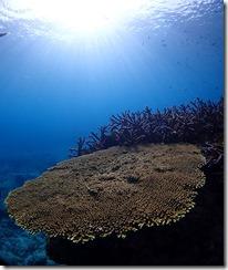 okinawa kerama diving1231