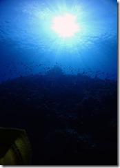 okinawa kerama diving1232