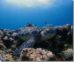 okinawa kerama diving1233