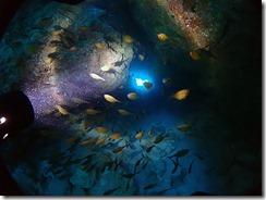 okinawa kerama diving1234