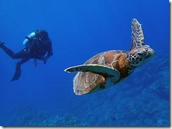 okinawa kerama diving633