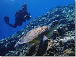 okinawa kerama diving634