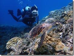okinawa kerama diving639
