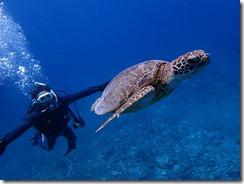 okinawa kerama diving640