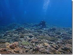 okinawa kerama diving643
