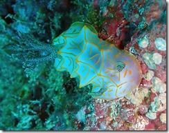 okinawa kerama diving667