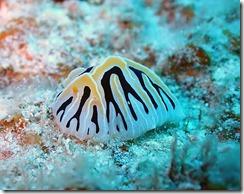 okinawa kerama diving669