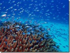 okinawa kerama diving670