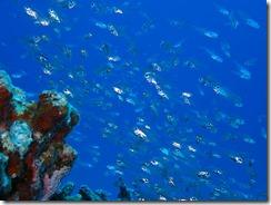 okinawa kerama diving671