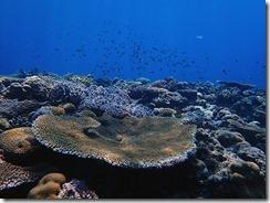 okinawa kerama diving672