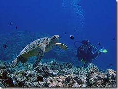 okinawa kerama diving674