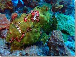 okinawa kerama diving681