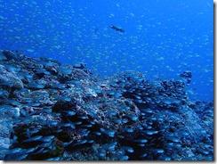okinawa kerama diving684
