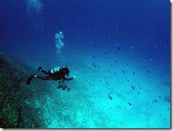 okinawa kerama diving685