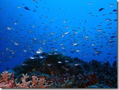 okinawa kerama diving689