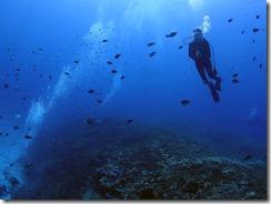 okinawa kerama diving690