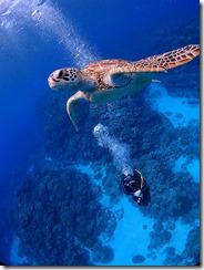 okinawa kerama diving694