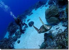 okinawa kerama diving695