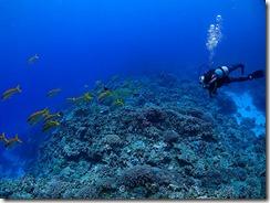 okinawa kerama diving696