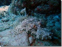 okinawa kerama diving697