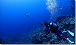 okinawa kerama diving706