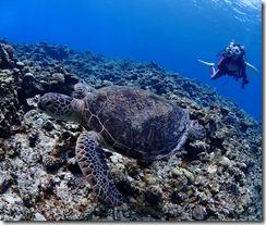 okinawa kerama diving707