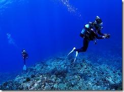 okinawa kerama diving710