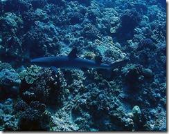 okinawa kerama diving714