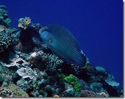 okinawa kerama diving715