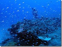 okinawa kerama diving717