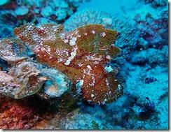 okinawa kerama diving718