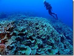 okinawa kerama diving719