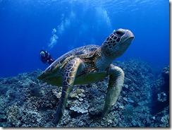 okinawa kerama diving720