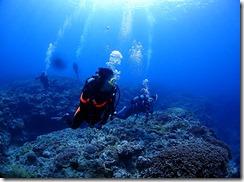 okinawa kerama diving721