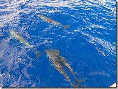 okinawa kerama diving724