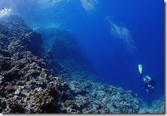 okinawa kerama diving726