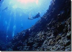 okinawa kerama diving734