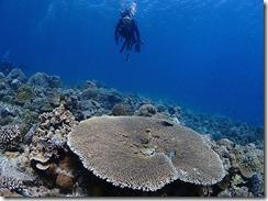 okinawa kerama diving754