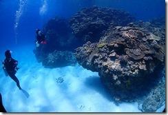 okinawa kerama diving757