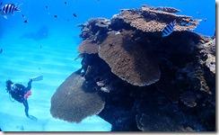 okinawa kerama diving758