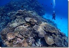 okinawa kerama diving759