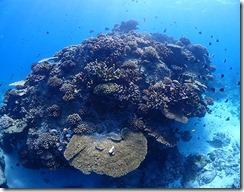 okinawa kerama diving762