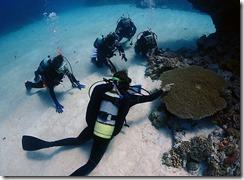 okinawa kerama diving767